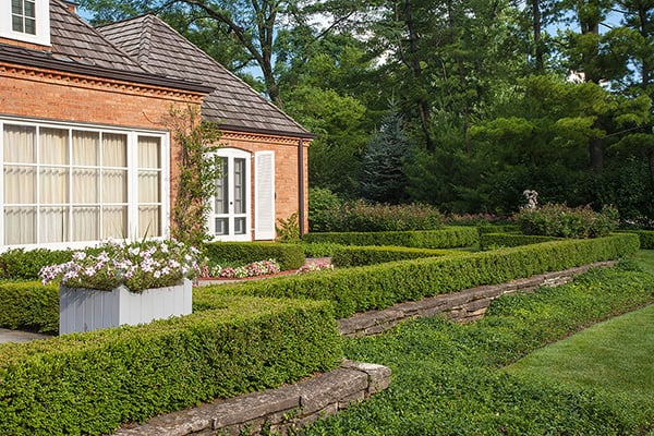 formal boxwood hedge in winnetka IL